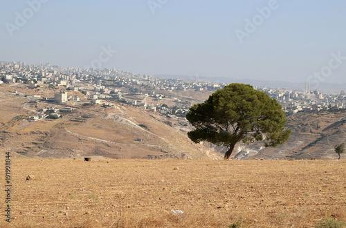 Tree outside of Bethlehem Fototapete