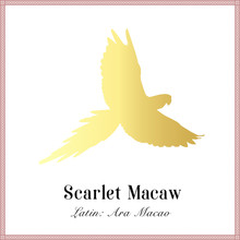 Scarlet Macaw Gold Gradient Si...