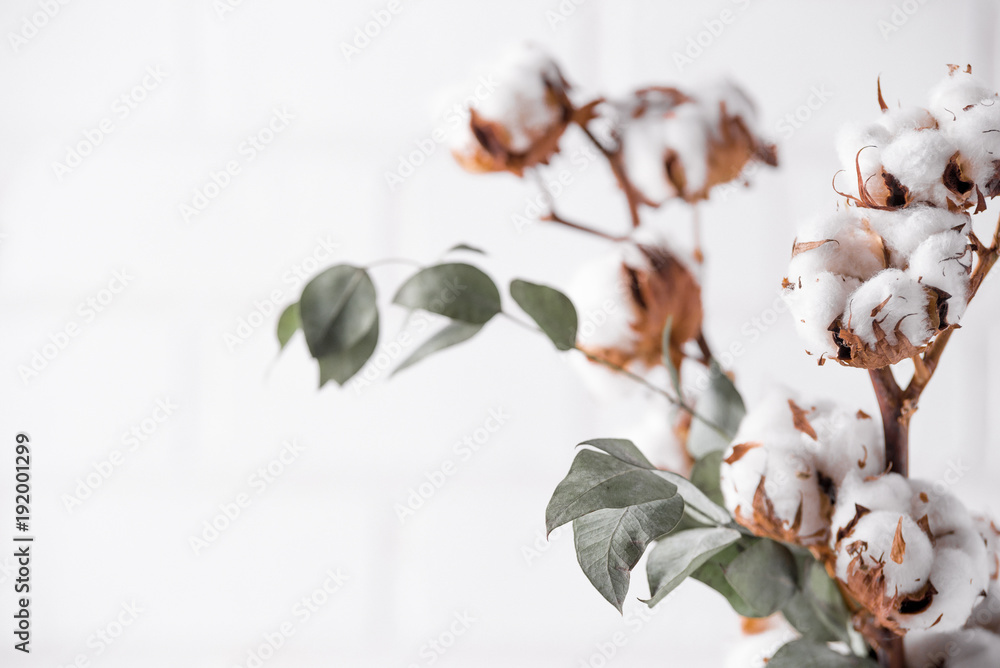 Fototapety, obrazy: Autumn composition. Dried white fluffy cotton flowers on white wood wall with copy space. Floral composition