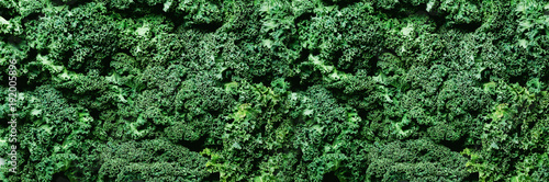 Fotografia  Fresh organic green kale background, selective focus, top view, copy space