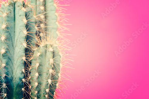Keuken foto achterwand Cactus Cactus plant close up. Trendy pastel coloured minimal background with cactus plant.