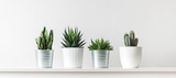 Fototapeta Kwiaty - Collection of various cactus and succulent plants in different pots. Potted cactus house plants on white shelf against white wall.