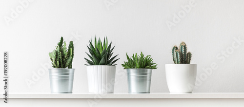 Papiers peints Cactus Collection of various cactus and succulent plants in different pots. Potted cactus house plants on white shelf against white wall.