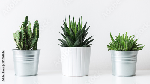Keuken foto achterwand Cactus Collection of various cactus and succulent plants in different pots. Potted cactus house plants on white shelf against white wall.
