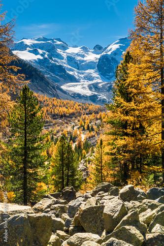Fotografie, Obraz  Morteratschgletscher und Gelbe Lärchen im Val Morteratsch, Pontresina, Schweiz