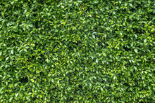 Textured Green Vertical Garden...