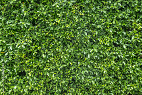 Textured green vertical garden background