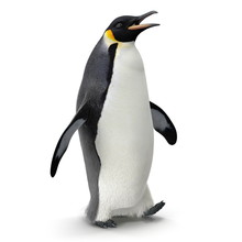 Emperor Penguin. Isolated On W...