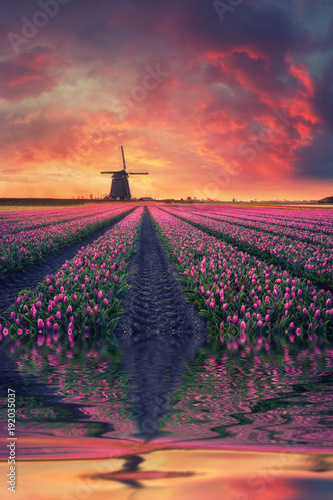 Dawn over Field of Tulip and Windmill Canvas