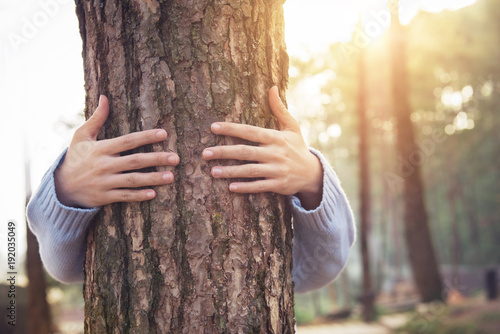 Fotografie, Obraz  Closeup hands of woman hugging tree with sunlight