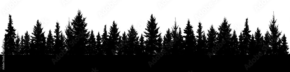 Fototapety, obrazy: Forest of Christmas fir trees silhouette. Coniferous spruce panorama. Park of evergreen wood. Vector on white background