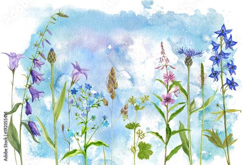 akwarela rysunek kwiaty i rośliny