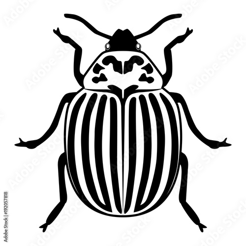 Slika na platnu Vector image of the Colorado beetle silhouette on a white background