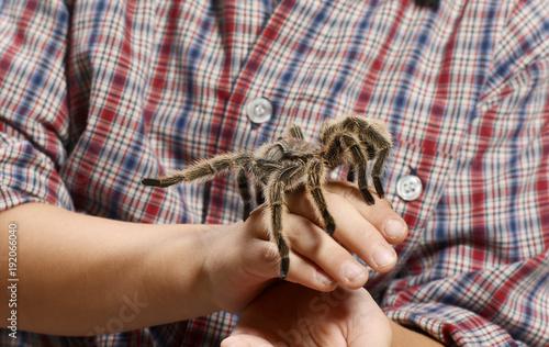 Kinderhand hält eine Vogelspinne