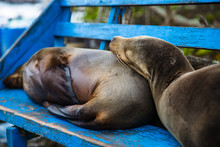 Cuddling Sealions On Bench