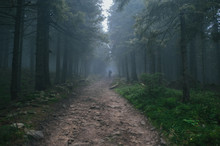 Road In Spruce Woods In Foggy Day And Man Afar
