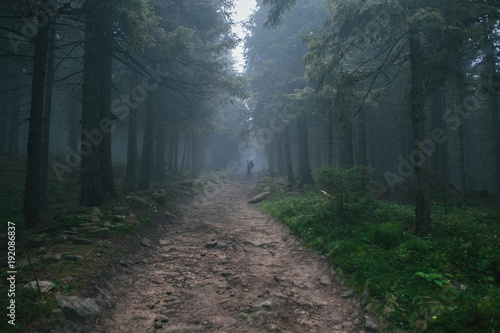 Cadres-photo bureau Route dans la forêt Road in spruce woods in foggy day and man afar