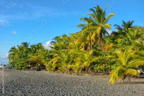Fotografie, Obraz  Palmiers sur la plage