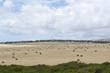 Random Field of Hay Bales, Cape Jervis, Fleurieu Peninsula, South Australia