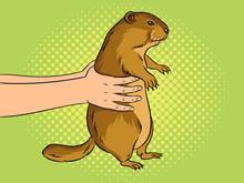 Groundhog In Hands Pop Art Vec...