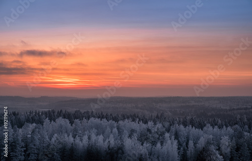 Foto op Canvas Zalm Scenic view with beautiful sunset and frosty tree at winter evening in Finland