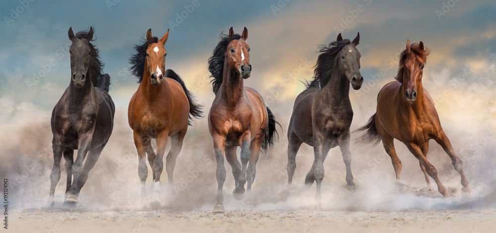 Horse herd run fast in desert dust against dramatic sunset sky