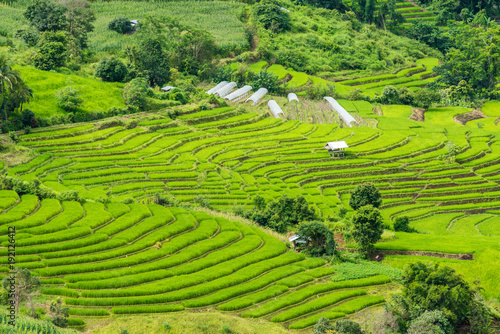 Tuinposter Rijstvelden Terraced rice fields at Pa pong Pieng in Chiang Mai, Thailand