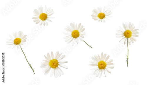 Foto op Canvas Madeliefjes Set of white daisy flowers