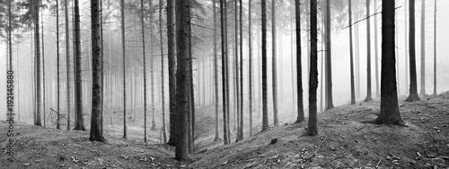 las-swierkowy-w-zimie-gesta-mgla-czarno-bialy