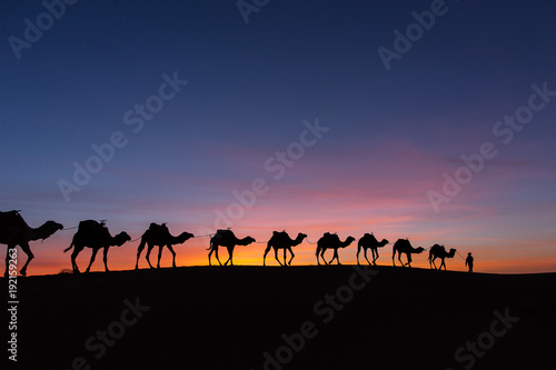 Spoed Foto op Canvas Kameel Silhouette of caravan in desert Sahara, Morocco with beautiful and colorful sunset in background
