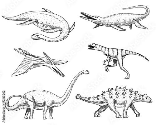 Photo  Dinosaurs Elasmosaurus, Mosasaurus, Barosaurus, Diplodocus, Pterosaur, Ankylosaurus, Velociraptor, fossils, winged lizard
