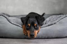 Hund Liegt In Körbchen Mit Gr...