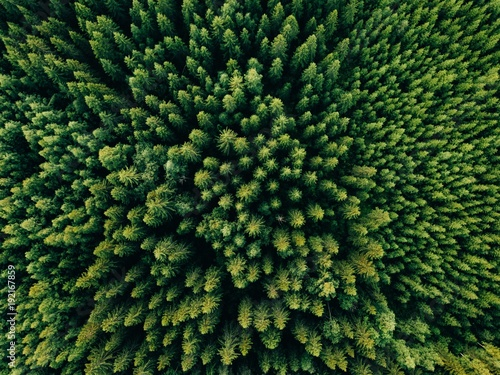 Foto op Plexiglas Bos Aerial top view of summer green trees in forest in rural Finland.