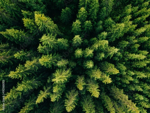 In de dag Bos Aerial top view of summer green trees in forest in rural Finland.