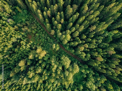 Fotobehang Bossen Aerial top view of summer green trees and road in forest in rural Finland.