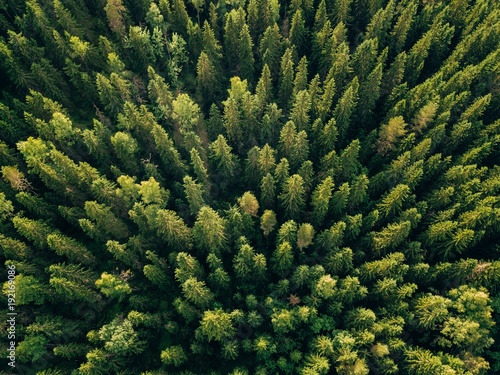 Poster Forets Aerial top view of summer green trees in forest in rural Finland.