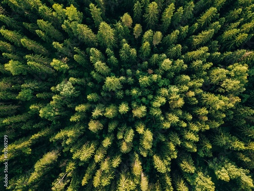 Fototapeten Wald Aerial top view of summer green trees in forest in rural Finland.