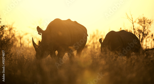 Fotografija  African sunset with rhinoceros