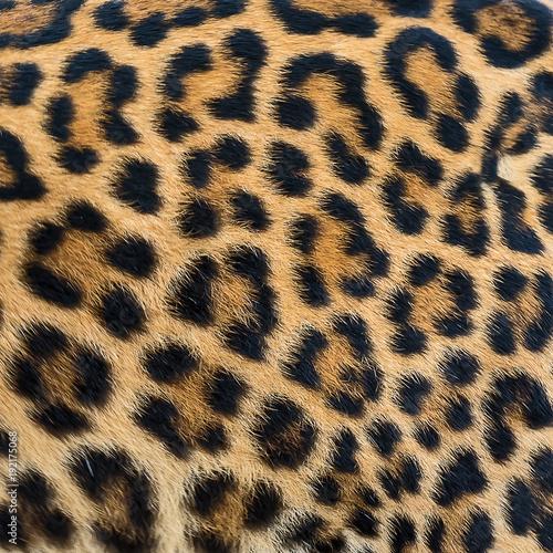 Leopard fur background. Wallpaper Mural