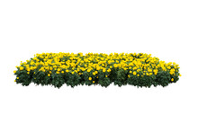 Yellow Flower Bush Tree Isolate With Clipping Path