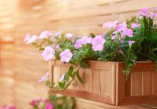 Hanging Basket With Pink Flowe...