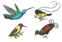 Small Hummingbird. Rufous And White-necked Jacobin, Bird Of Paradise. Exotic Tropical Animal Icons. Golden Tailed Sapphire. Use For Wedding, Party. Engraved Hand Drawn In Old Sketch.