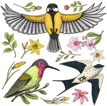 Small Birds Of Barn Swallow Or Martlet And Parus Or Titmouse, Rufous. Daffodil And Orchid With Leaves And Roses Buds. Wedding Flowers In Spring Garden. Exotic Tropical Animal. Engraved Hand Drawn.