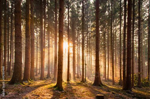 Fototapeten Wald Wald mit Sonnenstrahlen