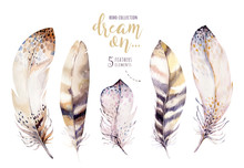 Hand Drawn Watercolor Paintings Vibrant Feather Set. Boho Style Rose Wings. Illustration Feathers Isolated On White. Bohemoan Bird Fly Design For T-shirt, Invitation, Wedding Card.