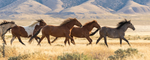 Herd of Wild Horses Running Canvas Print