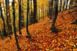 autumn forest. foggy morning in a picturesque autumn forest