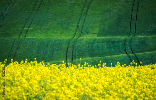 Papiers peints Jaune Green and gray spring field abstract background
