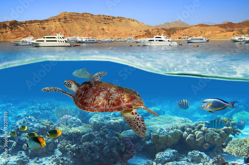 Turtle swimming underwater in Red Sea, Egypt