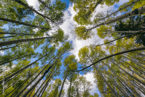 Low angle view of trees against sky in forest - 192235467